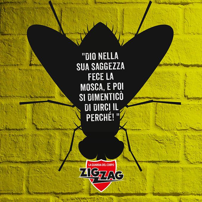 Zig Zag mosca